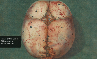 Illustration of a human brain in 1735