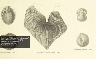 en-cur-207-fossils-01